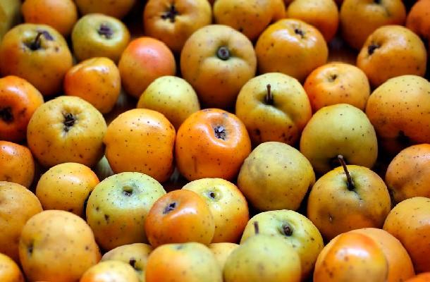 fruto de la raiz de tejocote